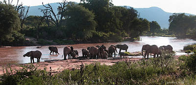 Photograph - Elephants At Mara River Watercolor by Joseph G Holland