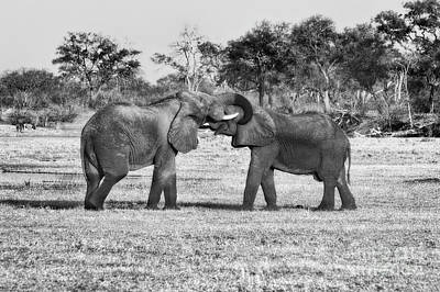 Elephants At Play In Black And White Art Print by Kay Brewer
