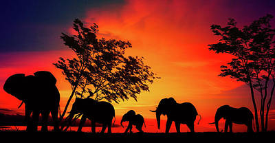Photograph - Elephants At Sunset by Nato Pereira