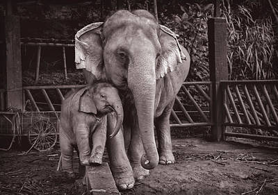 Lee Craker Royalty-Free and Rights-Managed Images - Bua Thong and Daughter Am by Lee Craker