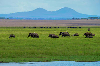 Photograph - Elephants By The Tarangire River by Marilyn Burton