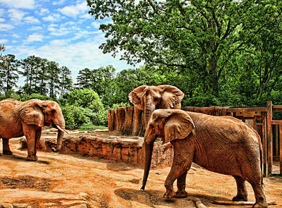 Photograph - Elephants by Cathy Harper