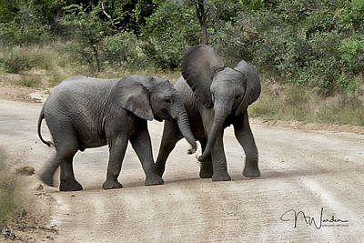Photograph - Elephants Childs Play by Norma Warden