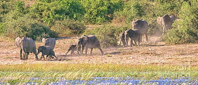 Photograph - Elephants Coming To The River by Myrna Bradshaw