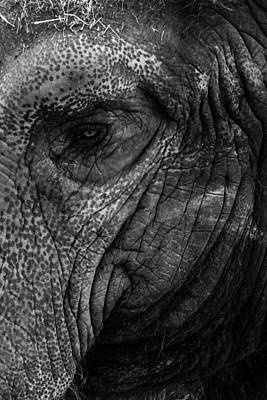 Elephants Eye Art Print by Keith Allen