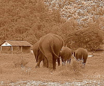 Art Print featuring the photograph Elephants II by Louise Fahy