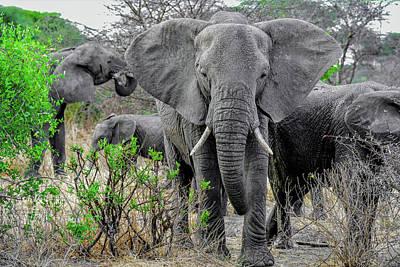 Photograph - Elephants In The Tarangire by Marilyn Burton