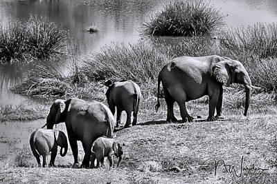 Photograph - Elephants Morning Stroll I by Norma Warden