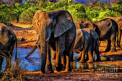 Photograph - Elephants Nearby by Rick Bragan