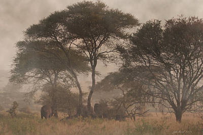 Elephants On The Serengeti Foggy Evening Original