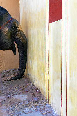 Photograph - Elephants Trunk by Prakash Ghai