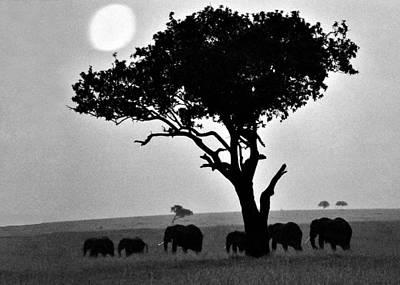 Elephants Under A Tree Art Print