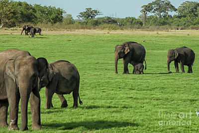 Photograph -  Elephants With Young by Patricia Hofmeester