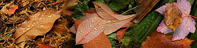 Fallen Leaf Photograph - Elevated View Of Raindrops On Leaves by Panoramic Images