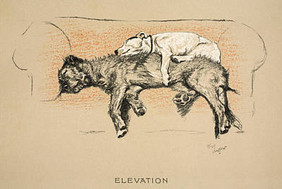 Cute Puppy Drawing - Elevation by Cecil Charles Windsor Aldin