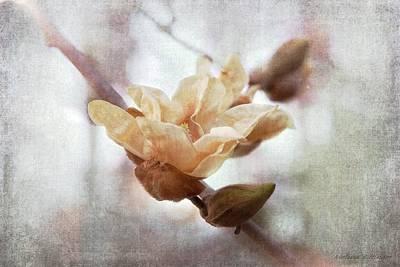 Photograph - Elizabeth Magnolia Bloom by Melissa Bittinger
