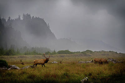 Photograph - Elk At Gold Bluffs Beach by Robert Woodward