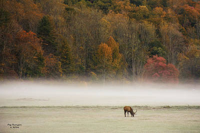 Photograph - Elk At Sunrise by Peg Runyan