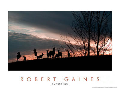 Photograph - Elk At Sunset by Robert Gaines