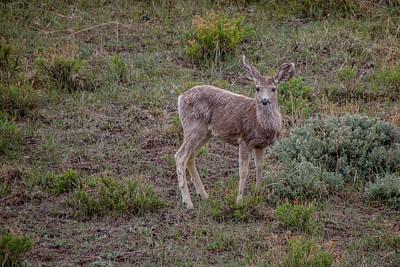 Photograph - Elk Calf by Teresa Wilson