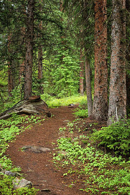 Photograph - Elk Camp Trail by Adam Pender