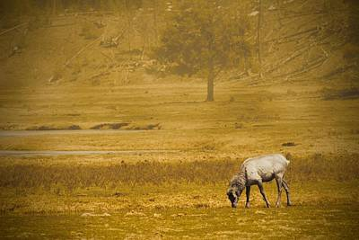 Photograph - Elk by Christopher Meade