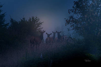 Photograph - Elk Dawn Patrol by Bill Posner
