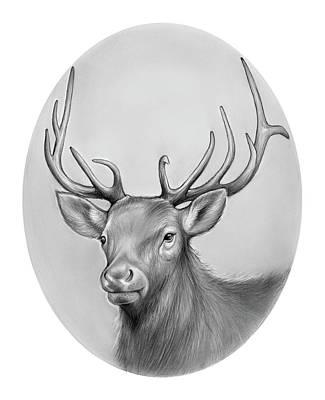 Animals Drawings - Elk by Greg Joens