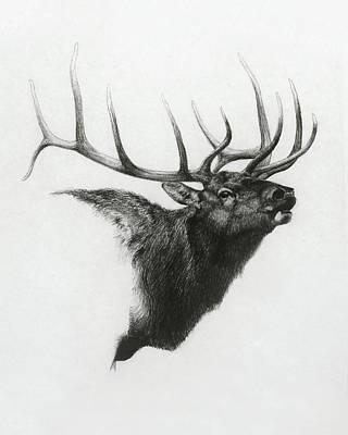 Elk Drawing - Elk by Heather Theurer