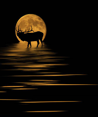 Reflection Photograph - Elk In The Moonlight by Shane Bechler