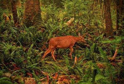 Photograph - Elk In The Rain Forest 002 by George Bostian