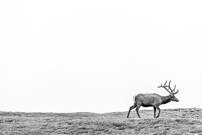 Photograph - Elk In The Rockies  by John McGraw