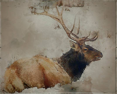 Mixed Media - Elk In The Snow by Teresa Wilson