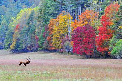 Elk In The Valley Original by Alan Lenk