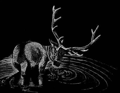 Drawing - Elk by Lawrence Tripoli