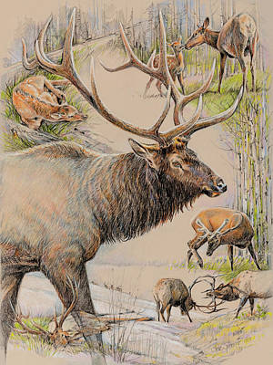 Elk Lifescape Art Print by Steve Spencer