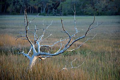 Elk-like Tree On Jekyll Island Art Print by Bruce Gourley