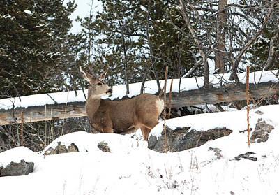 Photograph - Elk by Marilyn Hunt