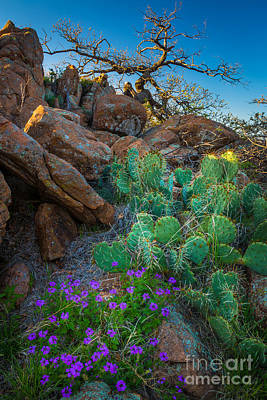 Wichita Photograph - Elk Mountain Flowers by Inge Johnsson