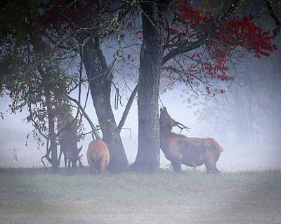 Photograph - Elk Neck Scratch by Lamarre Labadie