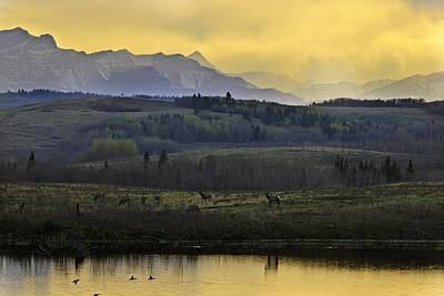 Photograph - Elk On The Horizon by Edward Kovalsky