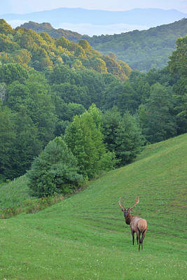 Photograph - Elk On The Range by Alan Lenk