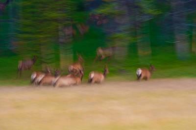 Elk Photograph - Elk On The Run by Sebastian Musial