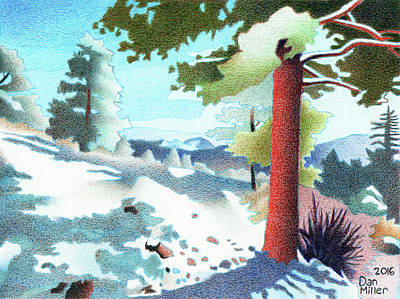 Winter Storm Drawing - Elk Ridge Evergreen by Dan Miller