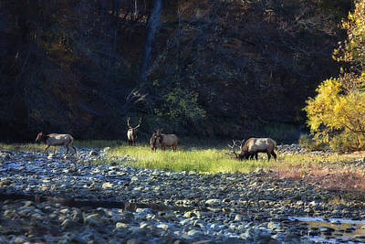 Art Print featuring the photograph Elk River Crossing At Sunrise by Michael Dougherty