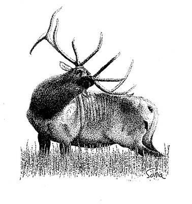 Drawing - Elk by Sonia Wilkinson