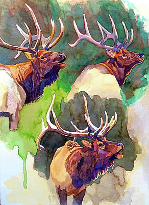 Painting - Elk Studies by Dan Miller