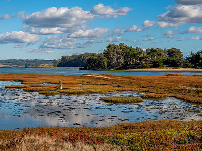 Photograph - Elkhorn Slough by Derek Dean