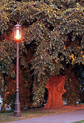 Photograph - Elm And Lamp Post by Doug Davidson