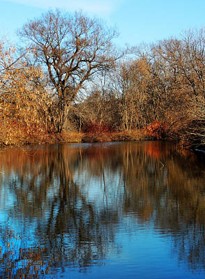 Photograph - Elm By The Connecticut River In Autumn by Nancy Griswold